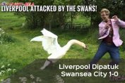 liga-inggris-liverpool-vs-swansea-city